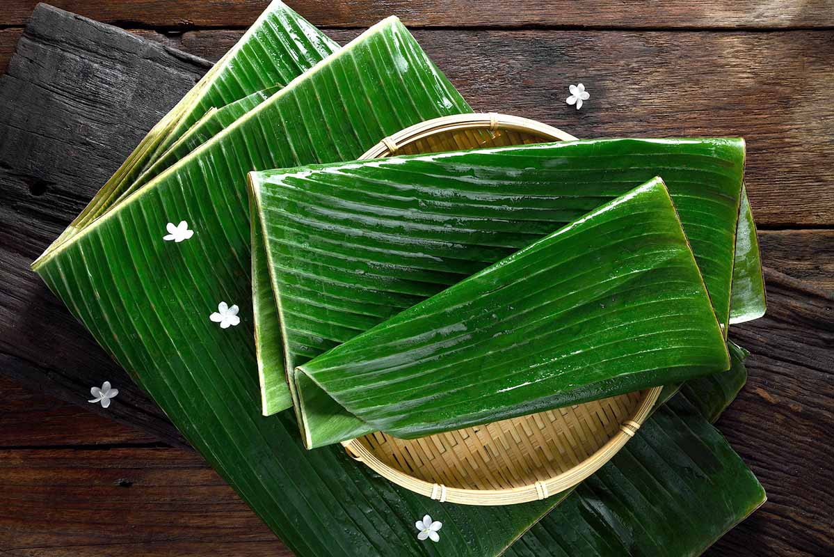 ใบตอง\nBanana Leaves (Musa paradisiaca L.)